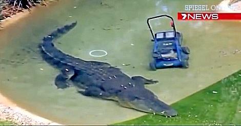Das räuberische Krokodil und der Rasenmäher