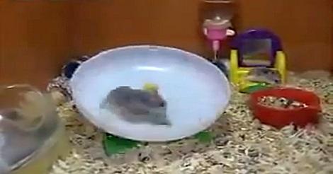 Das Hamsterrad…