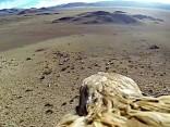 GoPro auf Adler