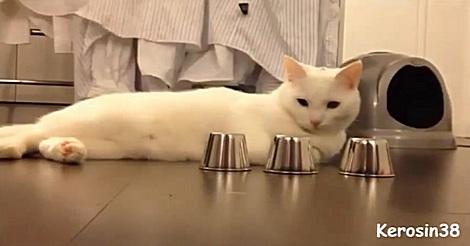 Katze Hütchenspiel
