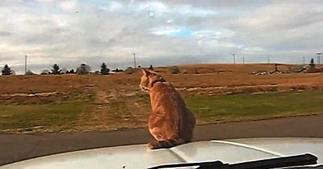 Katzen sind erstaunlich