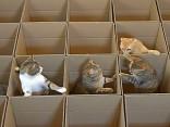 Katzen Labyrinth