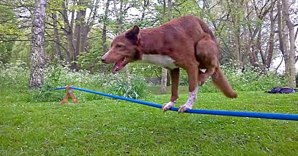 Hund Handstand auf Seil