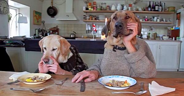 Hunde Dinner