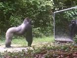 Tiere im Spiegel