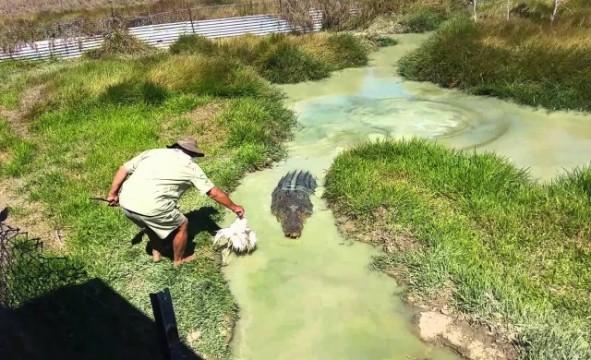 Auf einem Krokodil reiten…