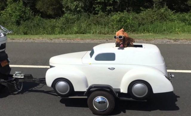 Hund fährt im eigenen Auto