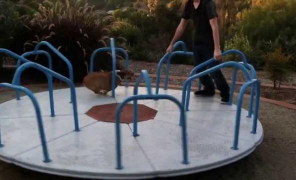 Hund hat Spaß auf Karussell