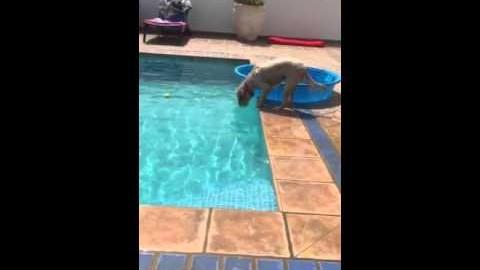 Hund holt clever den Ball aus dem Pool