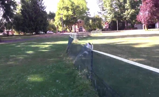 Hund macht unfreiwillig Front Flip