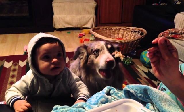 Hund sagt Mama