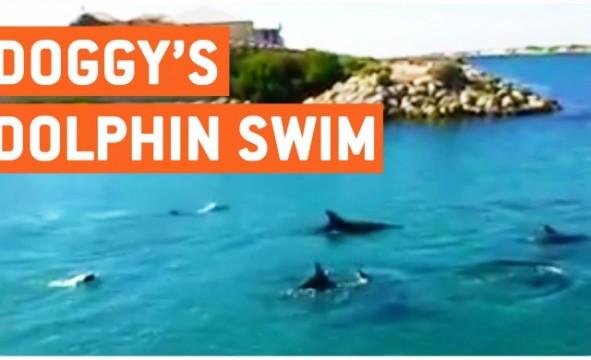 Hund schwimmt mit Delfingruppe