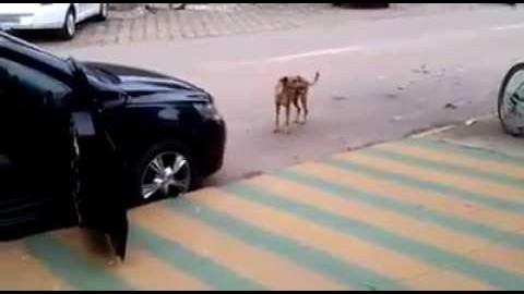 Hund tanzt zur Musik