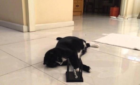 Katze von Kugelpendel fasziniert