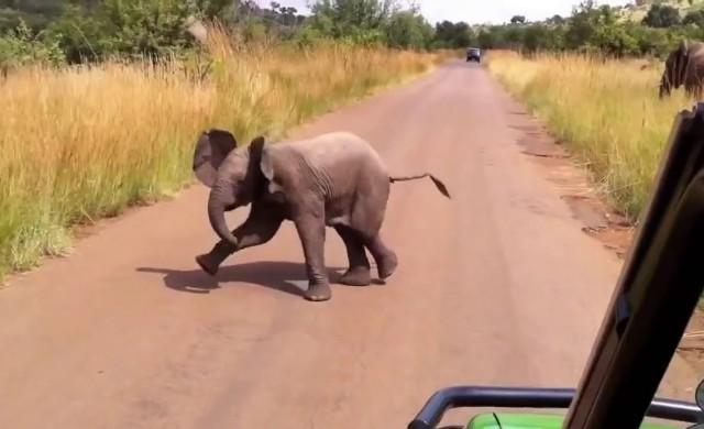 Baby Elefant ganz mutig!