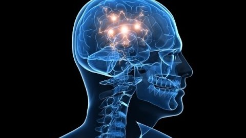 Das menschliche Gehirn – Doku