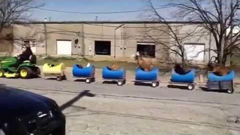 Ein Zug für Hunde