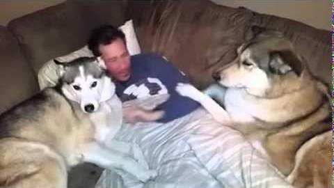 Hund ist extrem eifersüchtig