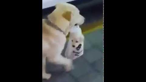 Hund trägt Welpe im Beutel