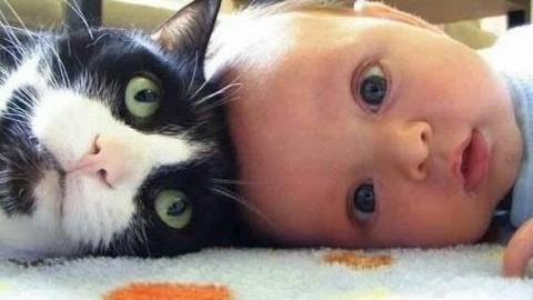 Katzen, Babys und Hunde