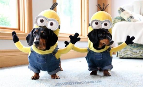 Minions Hunde