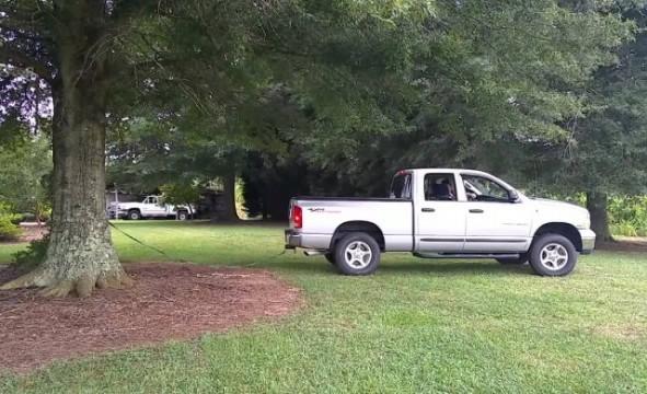 Truck fällt einen Baum
