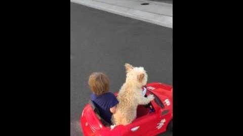 Hund chauffiert Kind im Mini-Auto