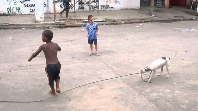 Hund dreht Springseil