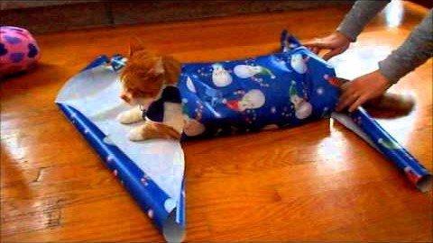 Eine Katze als Geschenk verpacken