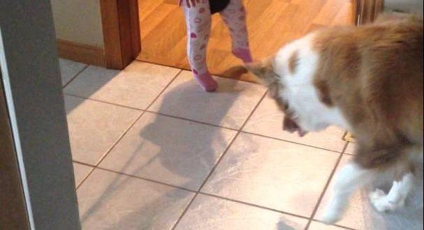 Hund lernt Baby das Hüpfen