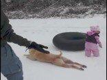 Hund rutscht im Schnee herum
