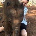 Baby Elefant will kuscheln