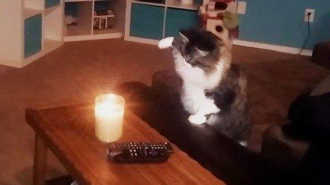 Katzen machen Kerzen aus