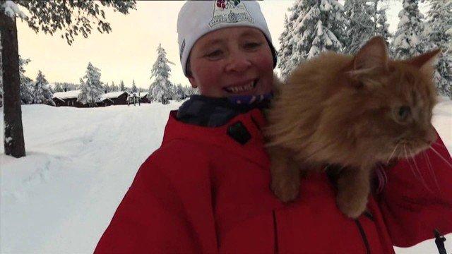 Schneekatze – wenn der Husky Urlaub hat…