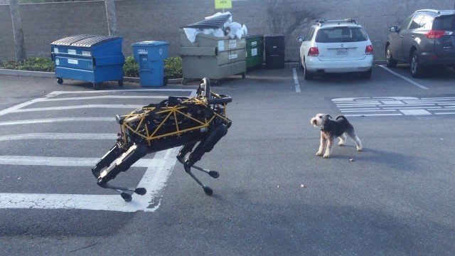 Hund trifft Roboter