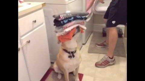Hund hilft im Haushalt!