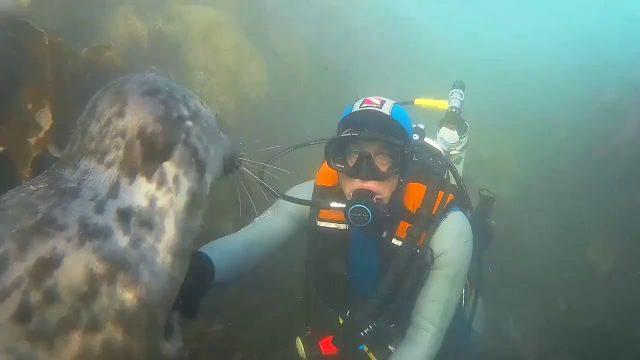 Guten Tag unter Wasser