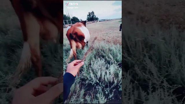 Wie man eine Kuh aufhält
